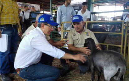 Plan Integral Caprino Ovino para el estado Yaracuy busca diversificar la economía del país