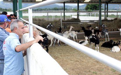 Freddy Bernal realizó recorrido a centro de producción de ganadería caprina
