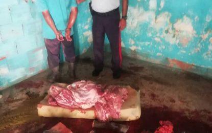 Detienen a ciudadano por hurto de ganado en el sector Mata de Guadua
