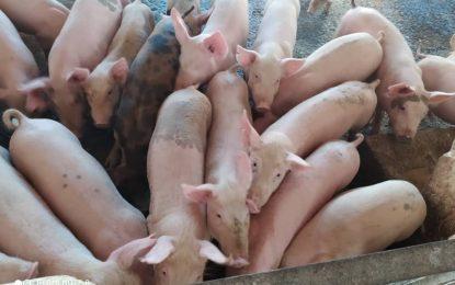 Protectorado impulsa Planta de Alimentos Balanceados para Animales
